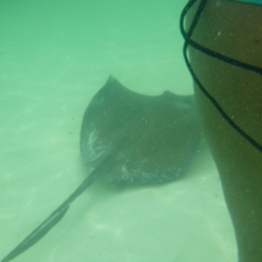 Carnival Conquest - Sting Ray Snorkel - Half Moon Cay 14