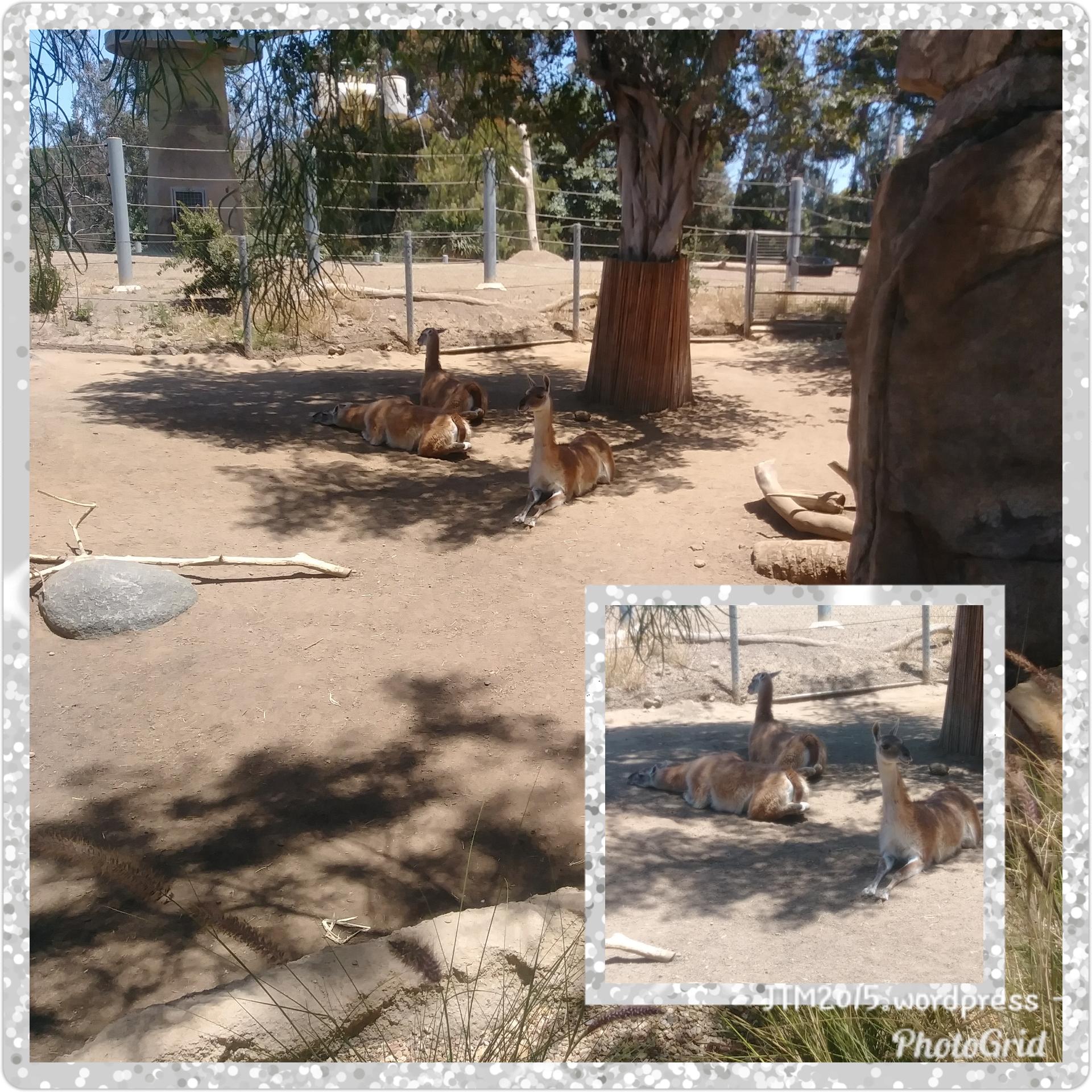 PhotoGrid_1528810536835.jpg